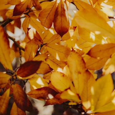 Bezpieczna jesień życia
